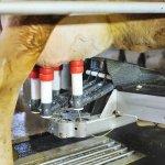 В Республике Удмуртия ввели в эксплуатацию молочный комплекс с роботизированной системой доения