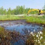 Несоблюдение правил утилизации отходов привело к увольнению четверти персонала Среднеуральской птицефабрики