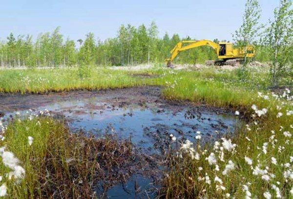 Среднеуральская птицефабрика десятки лет губит природу
