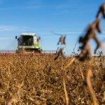 Производство сои на Дальнем Востоке будет субсидироваться на федеральном уровне