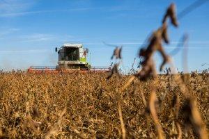 Производствосои и шрота на экспорт будет субсидироваться из федерального бюджета