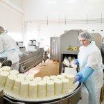 Немецкая компания DMK начала строить в Воронежской области сырный завод