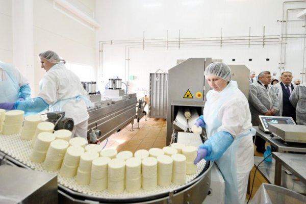 Немецкая компания строит в Воронежской области завод по производству сыров