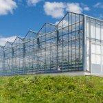 В Тамбовской области подходит к завершению строительство первой очереди тепличного предприятия «Мичуринский»