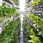 В Москве ввели в эксплуатацию первую очередь уникальной растениеводческой фермы