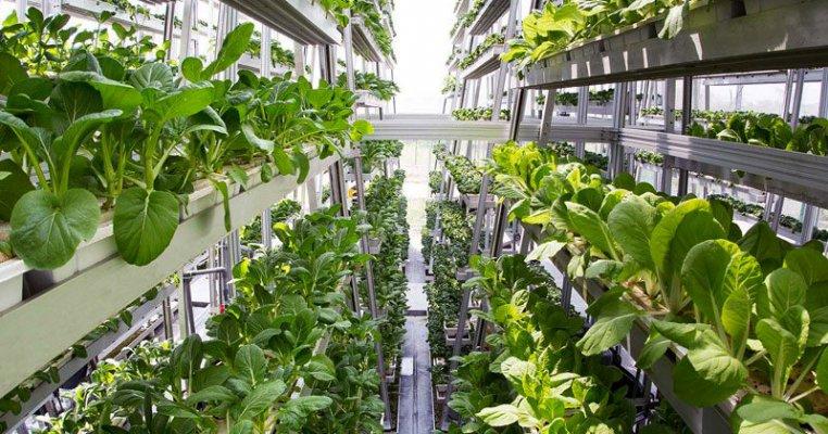 В Москве открылась вертикальная ферма по выращиванию зеленных культур