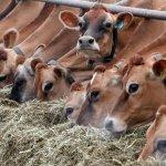 В Башкирии до конца текущего года появится новая животноводческая ферма