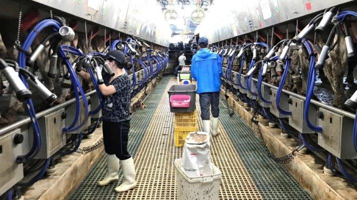 В Тверской области появятся три крупных животноводческих фермы
