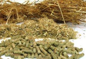 В ТОмской области начали выпускать биодобавки для скота из отходов животноводства