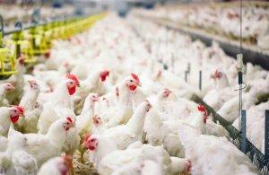 В Удмуртии открываетчя новый птицеводческий комплекс
