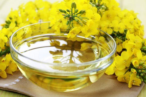 В Новосибирской области будет строиться завод по производству рапсового масла двойного отжима