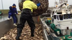В рыболовецкой отрасли требуются кардинальные изменения