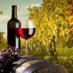 Российских виноделов поддержит государство