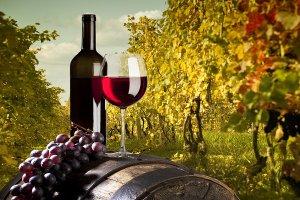 Принят закон о господдержке российских виноделов и виноградарей