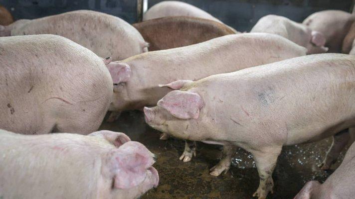 """ГК """"Агроэко"""" завершила строительство свиноовдческих ферм на территории Тульской области"""