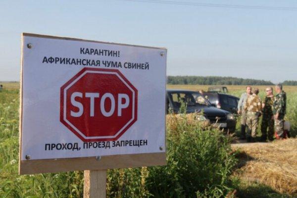В Ставропольском крае снова зафиксирован очаг африканской чумы