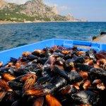 Крымские производители устриц в этом году выходят на международный рынок