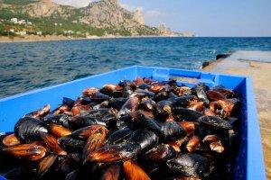 Крым начинает экспорт выращенных устриц и мидий за рубеж
