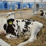 Развитие животноводческой отрасли в Саратовской области