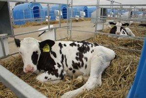 В Саратовской области активно разивается животноводческая отрасль