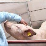 Новый животноводческий комплекс компании «Дымов» в Ивановской области начал работать в тестовом режиме
