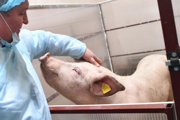 """Компания """"Дымов"""" реализует в Ивановской области масштабный проект по созданию свинокомплекса"""