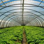 Турецкая компания «Полимекс» будет не только строить ТЦ в Татарстане, но выращивать помидоры