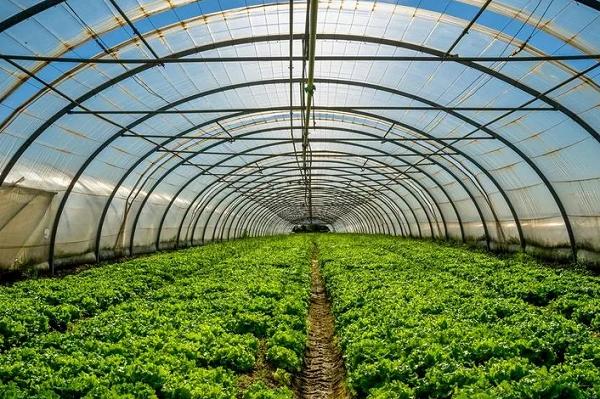 """Турецкая компания """"Полимекс""""подбирает площадку для строительства тепличного комплекса в Татарстане"""