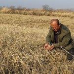 Китайская компания «Лянтай» реализует в ТОР «Михайловский» крупный проект по выращиванию риса и сои