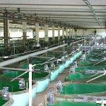 В Ростовской области наращивают производство продукции аквакультуры