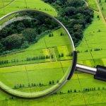 Пустующие сельскохозяйственные земли в Дальневосточном регионе будут передаваться инвесторам