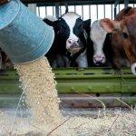 В Подмосковье открылся новый завод по производству кормов для сельскохозяйственных животных
