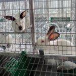 В Забайкалье в этом году появится крупнейшая кролиководческая ферма