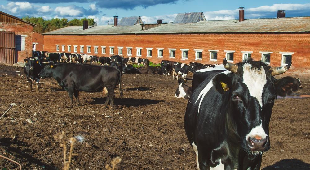 В сельхозпредприятии «Степное» Краснодарского края закончились работы по реконструкции молочно-товарной фермы