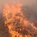 В Краснодарском крае злоумышленники подожгли сельскохозяйственную технику местного фермера