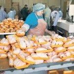 В Свердловской области под угрозой закрытия «Среднеуральская птицефабрика»