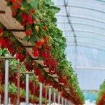 В Крыму фермеры организовали тепличное хозяйство