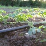 В Астраханской области запустили завод по производству биоразлагаемых элементов систем капельного орошения
