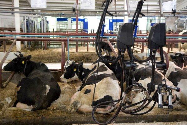 В Вологодской области строится новая роботизированная молочная ферма