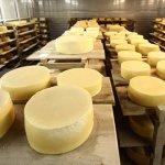 Два алтайских сыроваренных заводов приступили к работе после завершения реконструкции