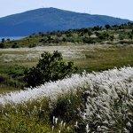 Свыше 2,5 миллионов гектаров бесхозной сельхозземли предложат инвесторам в ДФО