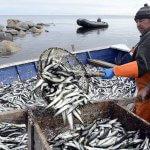 В Дагестане вылов рыбы в текущем году увеличился пятикратно
