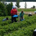 В Республике Татарстан сельскохозяйственных мигрантов заменят горожане