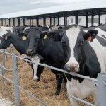 В Удмуртии завершается  строительство  животноводческого комплекса