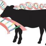 В Удмуртии будут разрабатывать индекс селекции и генетики молочного скотоводства