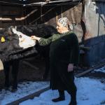 Малоимущим семьям Северной Осетии бесплатно выдают коров