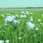 Студенты Тверской сельскохозяйственной академии впервые начали сев льна