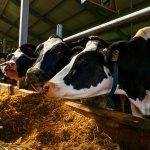 Компания «Агропромкомплектация» намерена построить в Курской области несколько животноводческих комплексов