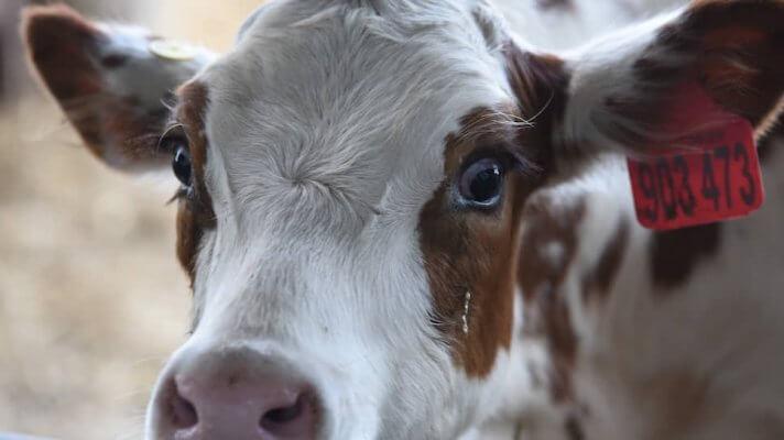 В Белгородской области планируется строительство молочно-товарного комплекса