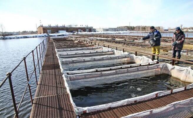 В Ямало-Ненецком автономном округе в этом году завершат строительство нового рыбозавода